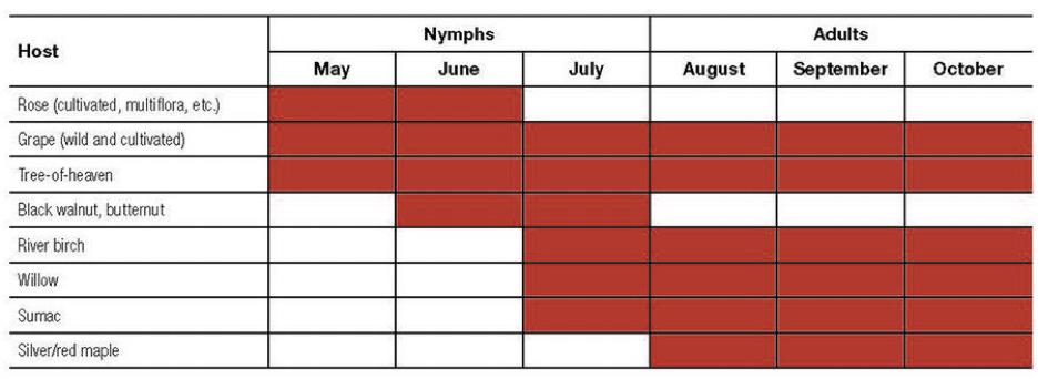 Seasonal graph for lanternflies.